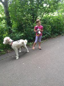 Lilly drog nästan ner lillmatte i diket på promenaden!