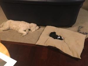 Lilly och Fiona har redan hittat varandra. Inte som adopterad mor och valp, men som riktigt fina kompisar! jag tror det här blir bra...